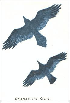 warum zwitschern vögel